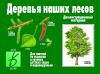 В-Д. Деревья наших лесов Д-284