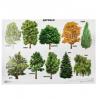 Плакат 'Деревья' 01375 А2