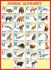 Плакат Алфавит- Английский А2 Animal Alphabet 0-02-328А